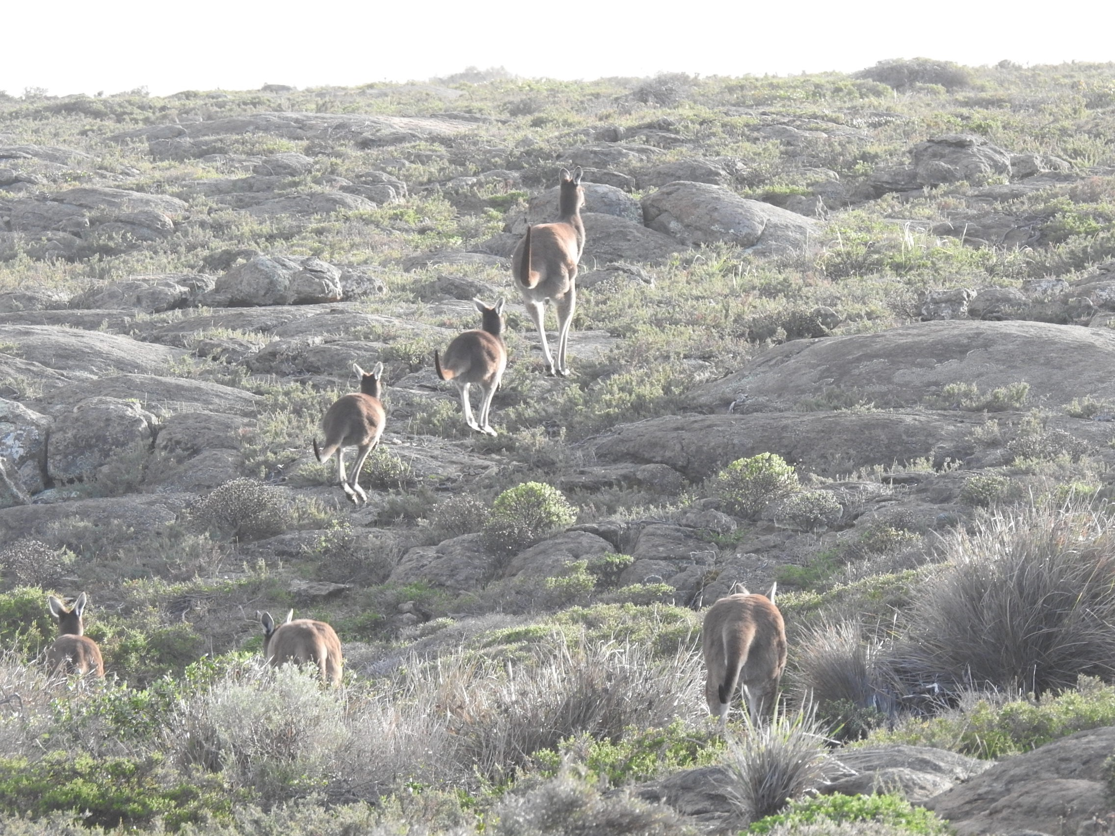 fauna on Cape to Cape Track