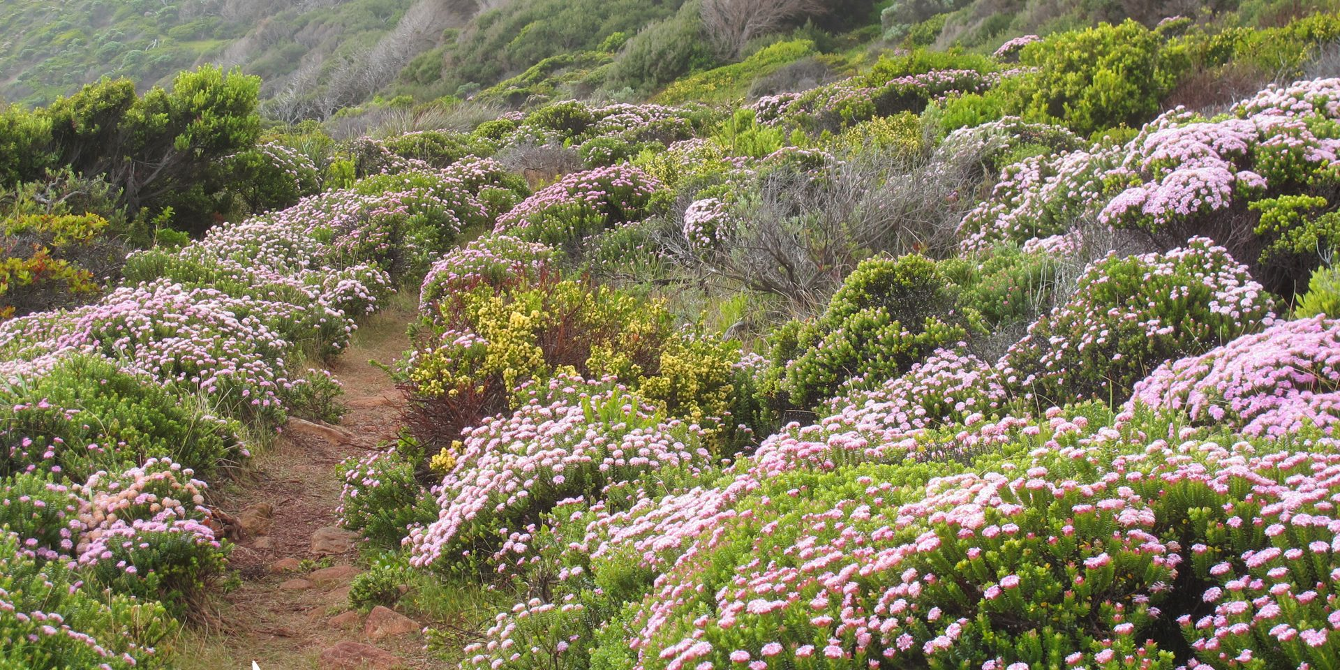 flora on the Cape to Cape Track