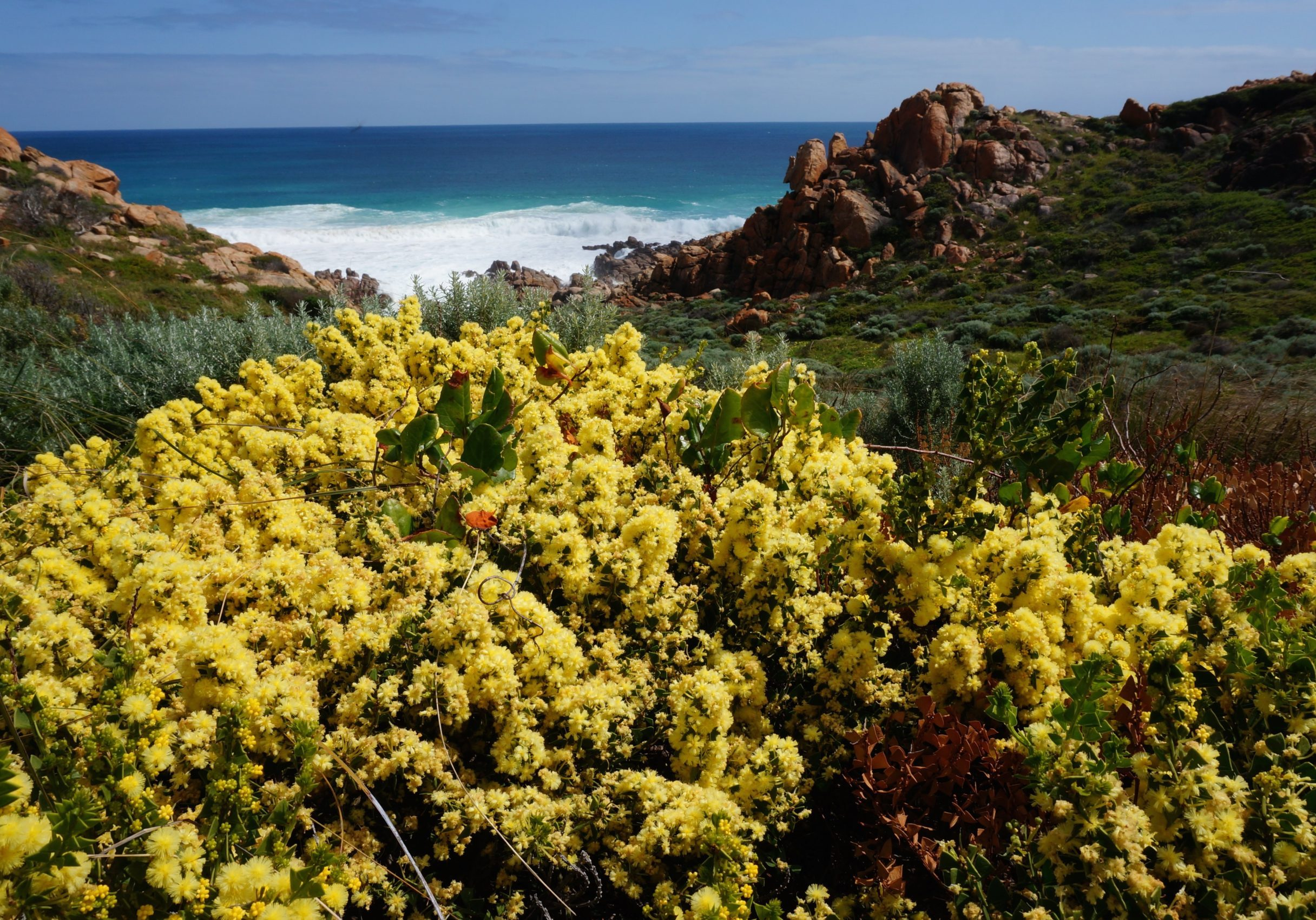 flora on Cape to Cape Track