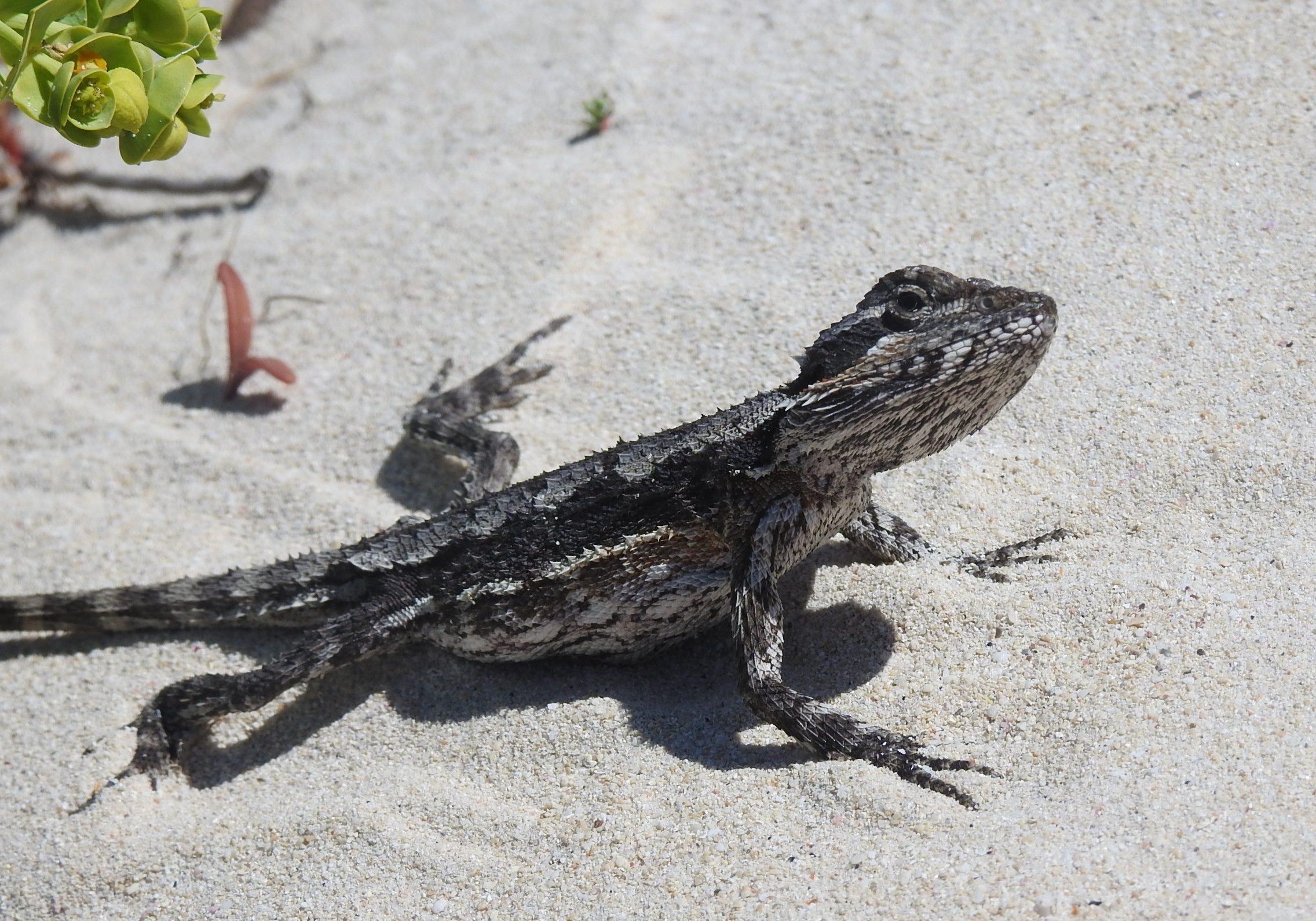fauna on Cape to Cape Track